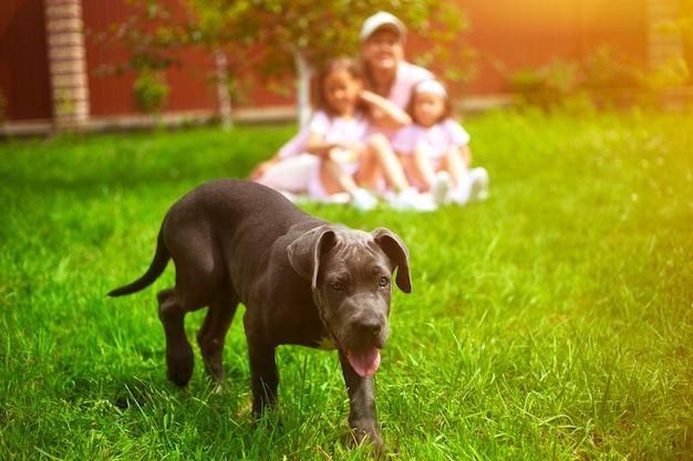 De puppyhond en defocused familie met kinderen in de zomer in de groene tuin
