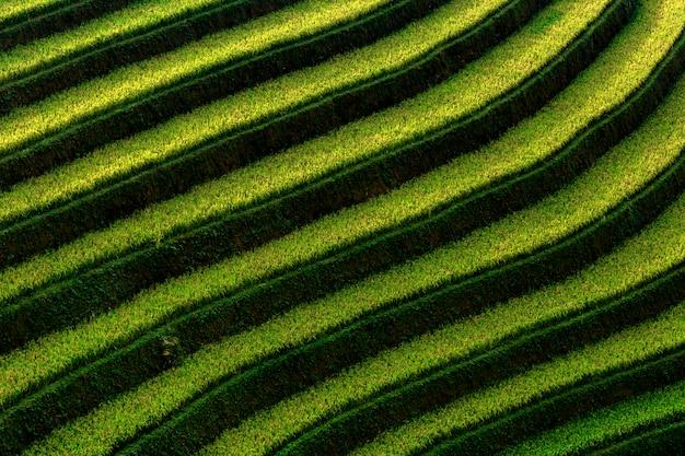 De rijstterrassen bij de zonsondergang sluiten omhoog