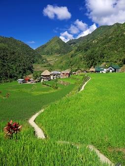 De rijstterrassen in bangaan, filippijnen