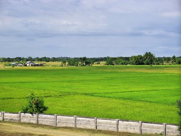 De rijstvelden in banaue filipijnen