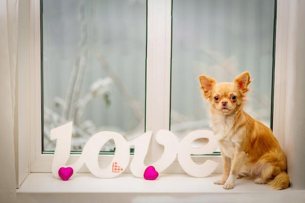 De rode chihuahua zit op de vensterbank, naast de witte inscriptie liefde en twee dieprode harten.