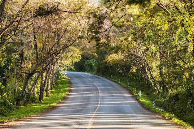 De romantische lente van de wegherfst in doi ang khang, chiang mai, thailand