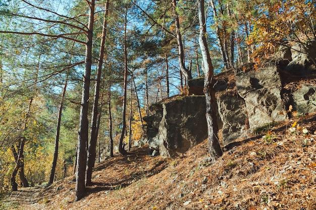 De rots in het herfstbos in de vroege ochtend