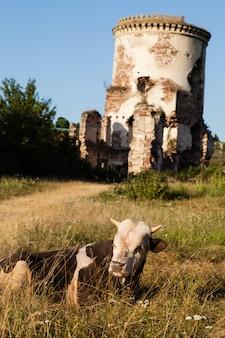 De ruïnes van een oud kasteel in het dorp chervonograd. oekraïne