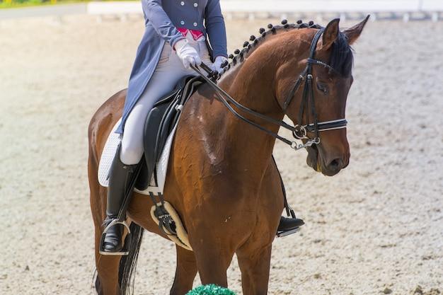 De ruiter in een zwart-wit pak voert de taak uit in paardensportwedstrijden in dressuur rijdend op een prachtig bay-paard, gekleed in munitie