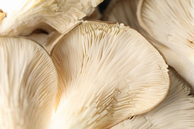 De ruwe verse oester schiet geweven achtergrond als paddestoelen uit de grond, sluit omhoog