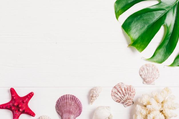 De samenstelling van de zomer met blad en shells