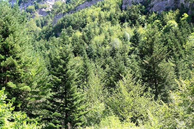 De scenics van de de bomen bosberg van de pyreneeën