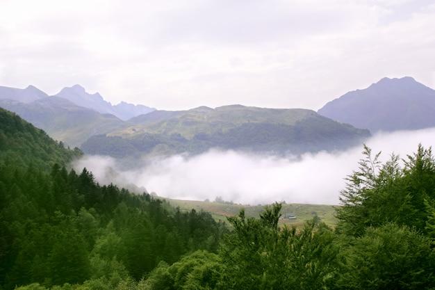 De scenicsaard van de mistige bergen bosmist