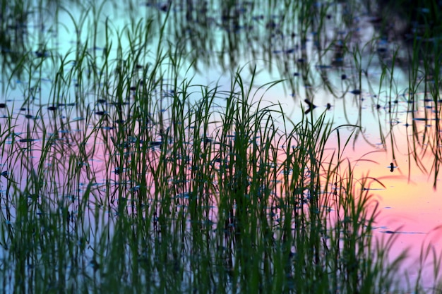 De schaduw van het onkruid weerspiegelde op het wateroppervlak bij weinig licht voor zonsondergang