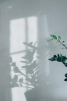 De schaduwen van bloemen planten op de grijze achtergrond van het muurbehang