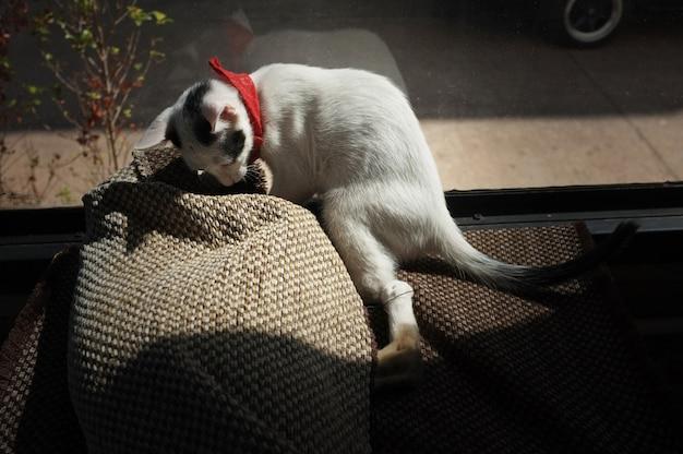 De schattige kat in het tapijt spelen