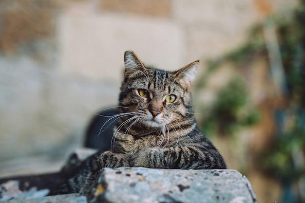 De schattige kat is uitgestrekt