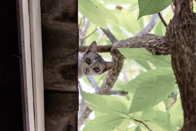 De schattige zwerfkat op het dak