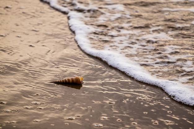 De schelp op het strand