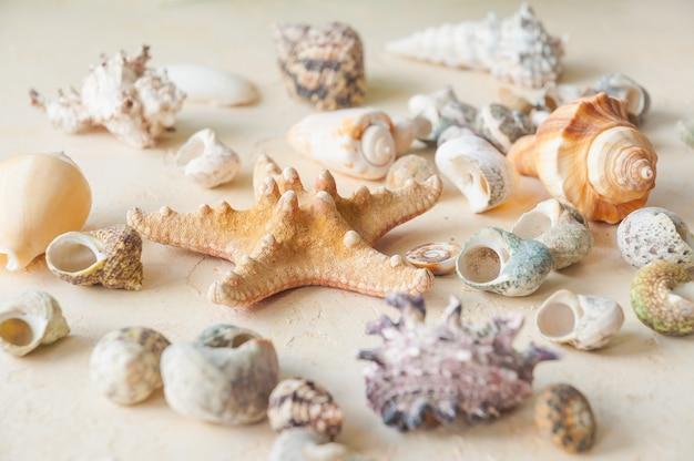 De schelpen op een beige zandachtergrond. horizontaal kader