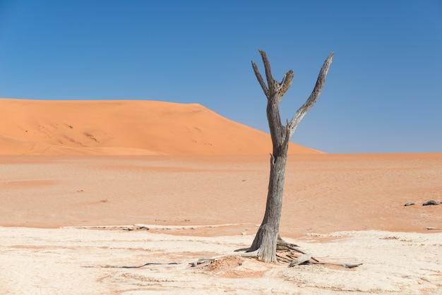De schilderachtige sossusvlei en deadvlei, gevlochten acaciabomen omringd door majestueuze zandduinen