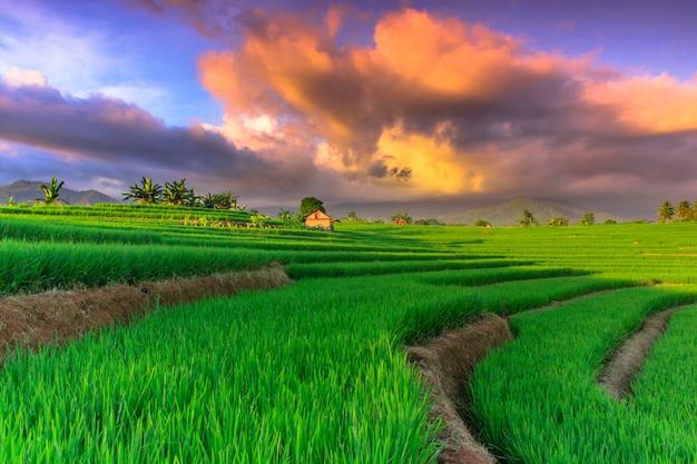 De schoonheid van het groene rijstterras met de beste lucht