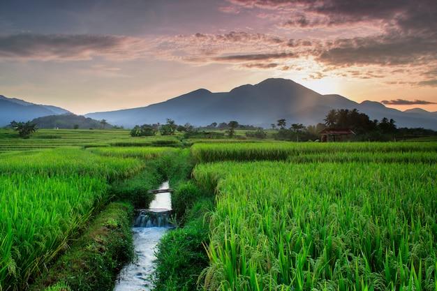 De schoonheid van rijstvelden in de ochtend met het groen van rijst in kemumu, noord-bengkulu, indonesië