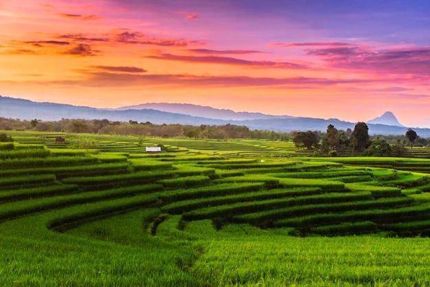 De schoonheid van rijstvelden in de ochtendzon tussen de bergen met foto's die mogelijk ruis zijn