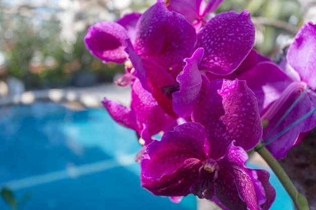 De schoonheid van thaise orchideeën.