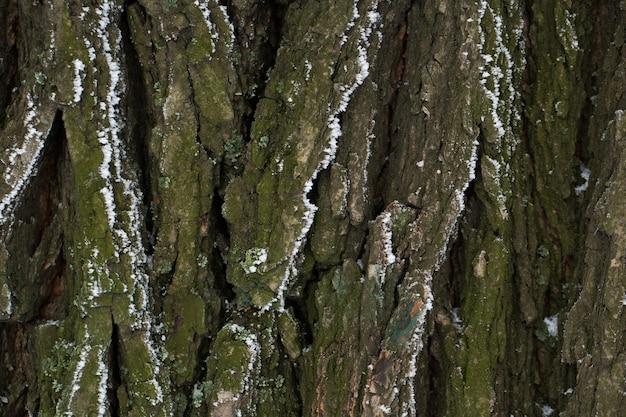 De schors van de boom in de sneeuw