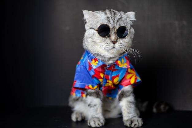 De schotse vouwenkat draagt een zonnebril en een hemd.