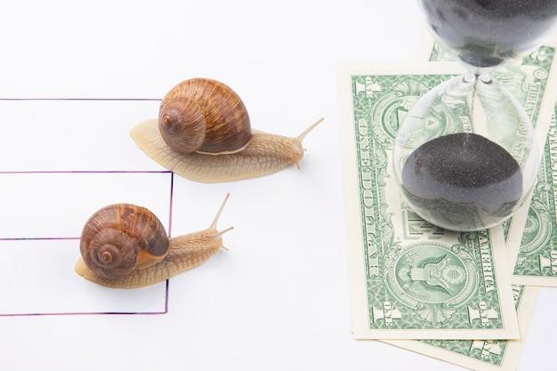 De slak heeft haast om snel te winnen voor het recht om geld te ontvangen.