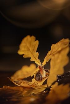 De slak kruipt op de tak van een eikenboom