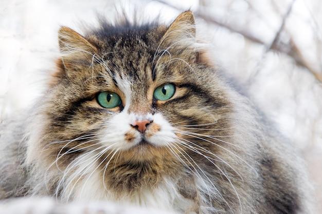 De snuit van een dakloze pluizige kat met mooie ogen.
