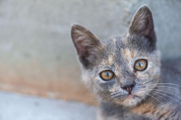 De snuit van een katjesclose-up. rode ogen wissen kitten