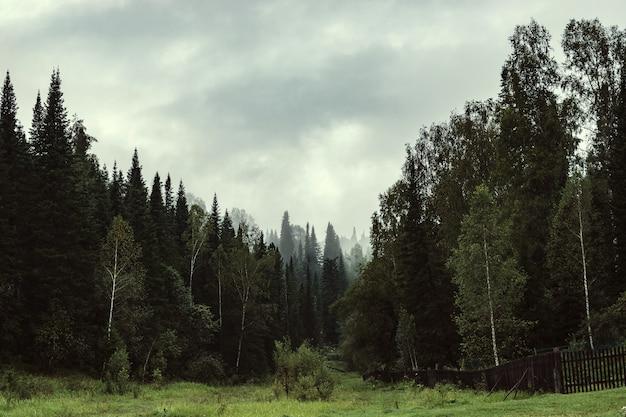 De sombere sfeer van de avond in het donkere bos.