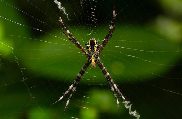De spin bouwt een val voor zijn lunch