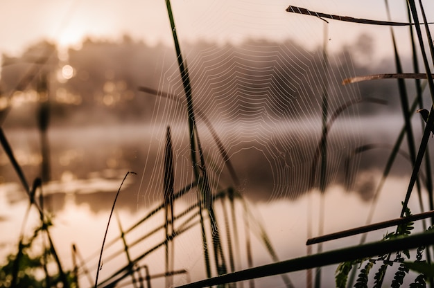 De spinneweb dichte omhooggaande achtergrond. glanzende waterdalingen op spinneweb over groene grasachtergrond.