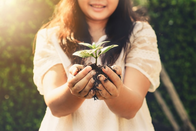 De spruit van de jonge plantboom in vrouwenhand. Premium Foto
