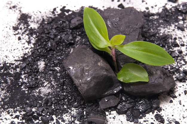 De spruit van een plant baant zich een weg door kolen