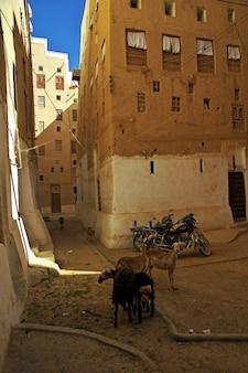 De stad van middeleeuwse wolkenkrabbers, shibam, wadi hadramaut, jemen