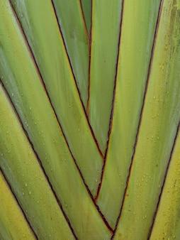 De stam van een exotische palmboom. botanische achtergrondstam van een bananenpalm.