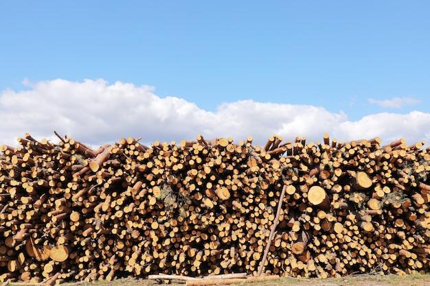 De stapel gesneden pijnboomboom opent een bos het programma. houtblokken, houtkap, industriële vernietiging, bossen verdwijnen, illegale houtkap. selectieve aandacht.