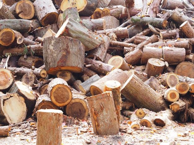 De stapel van gesneden logt het bos in.
