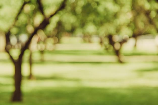 De steeg bokeh achtergrond van de tuin, lensonduidelijk beeld