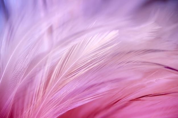 De stijl van het onduidelijke beeld en zachte kleur van de textuur van de kippenveer voor achtergrond, abstract art