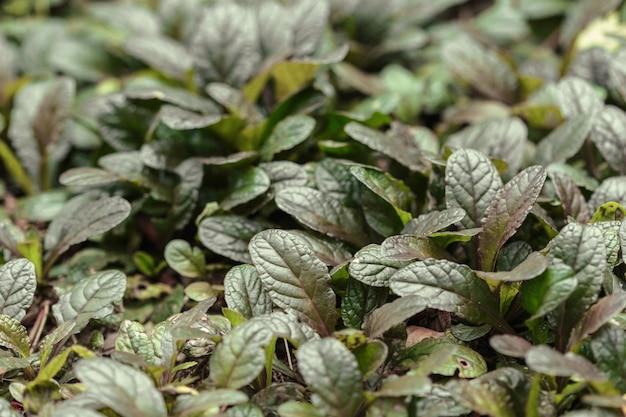 De struik van de tuininstallatie met bladeren sluit omhoog