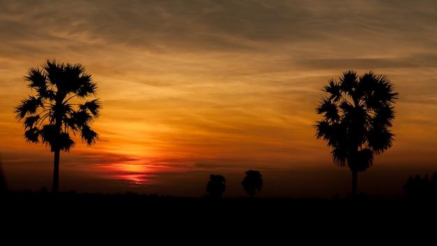 De suikerpalm van het silhouet op zonsopgang