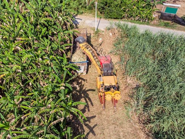 De suikerrietoogstmachine oogst suikerriet in de vrachtwagen