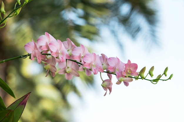 De tak van roze orchideeën