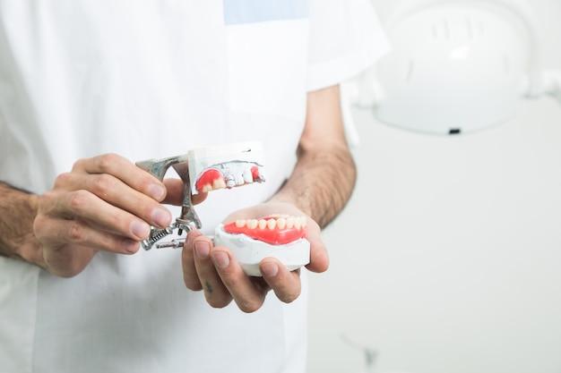 De tandarts houdt een nepkaak in zijn hand