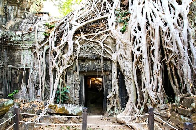De tempel van ta prohm in angkor, siem oogst, kambodja