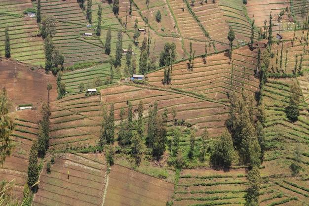 De terrasvormige landbouw