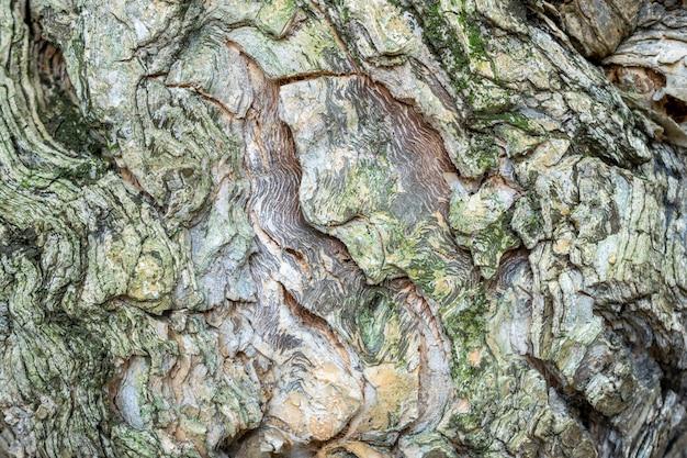 De textuur van de boomschors met groene details